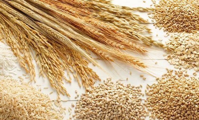 Злаковые для проращивания и получения солода. Здесь и ячмень, и пшеница.