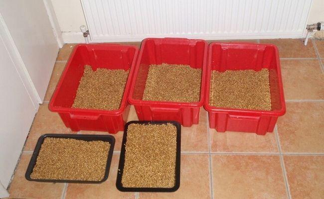 Проращивание солода в контейнерах по классической технологии.