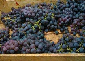 Брага из виноградного, яблочного жмыха