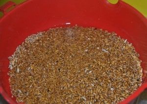 Брага на зерновой основе