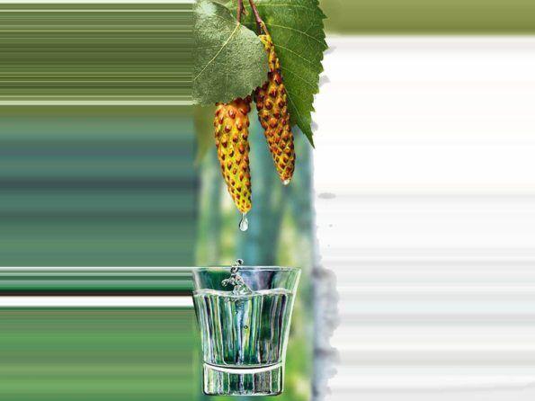 Целебная березовая настойка на водке