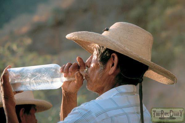Что такое текила и откуда взялся это напиток