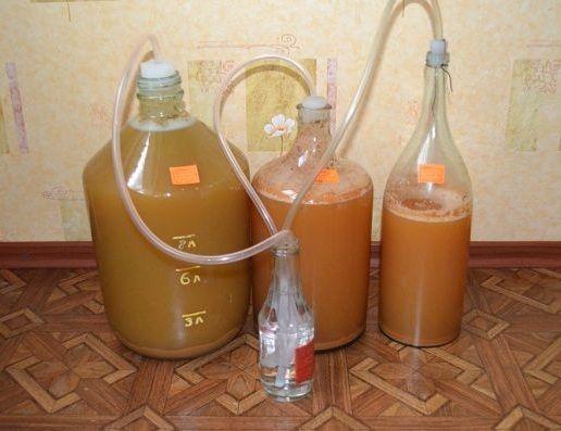 брожение персикового вина