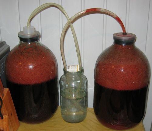 броженние вина из чернослива под водяным затвором фото