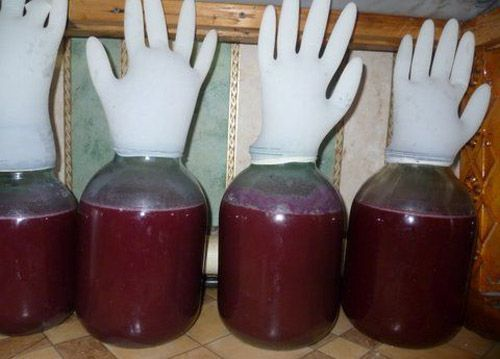 фото брожения черносливового вина под перчаткой
