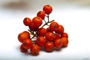Домашние настойки из ягод рябины красной