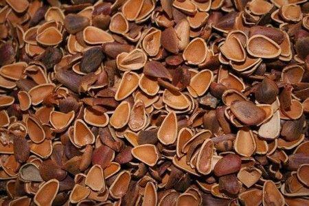 Готовим настойку из скорлупы кедровых орехов на водке