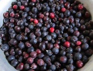 ягоды ирги
