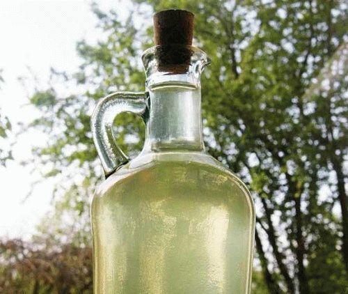 настойка из груши с мятой и имбирем фото