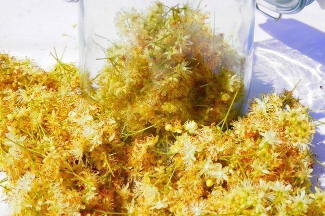 Хоть и липовая, но не «липа»! Полезные и вкусные настойки на липовом цвете