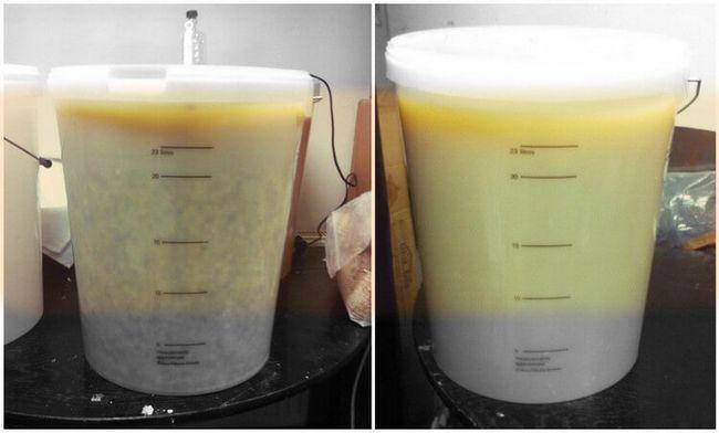Слева кукурузный затор до соложения, справа - после соложения и фильтрации.