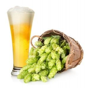 Из каких ингредиентов делают пиво