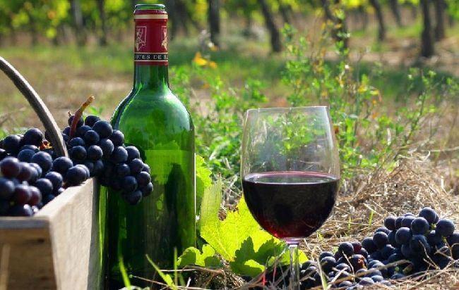 вино каберне совиньон фото
