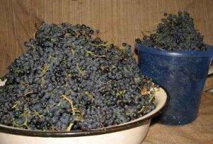 Как делать самогон из винограда