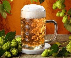 пиво в кружке и хмель
