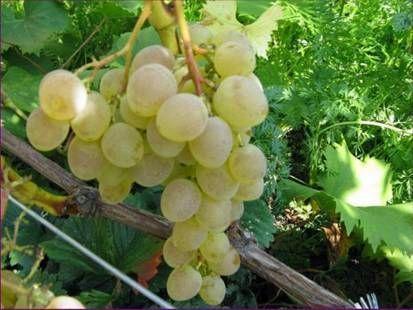 Приготовление пищи с вином