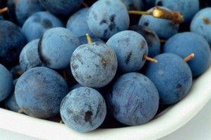Лучшие рецепты наливок из терносливы