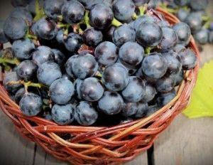 Наливка на винограде сорта изабелла с водкой