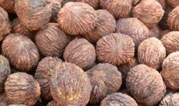 Настойка чёрного ореха – целебное лекарство от природы