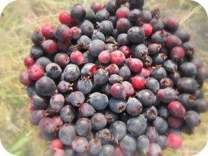 Настойка из ягод ирги: топ 6 рецептов