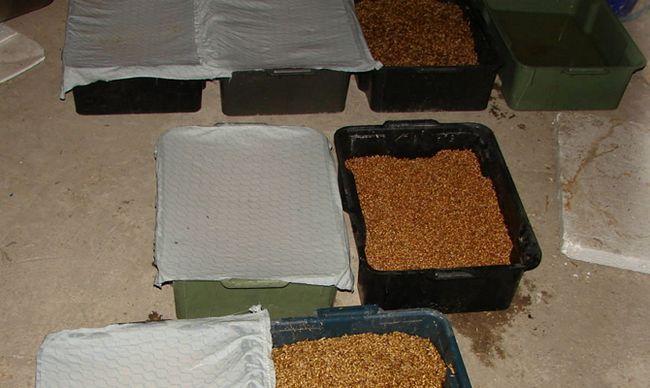 Ящики с пшеницей