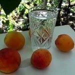 Рецепт и технология приготовления абрикосового самогона