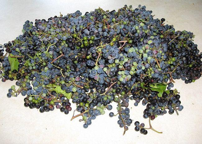 Za bolje fermentacije grožđa ChaCha Ne perite