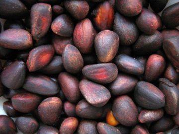 Рецепт кедровой настойки на самогоне. Настойка из кедровых орешков