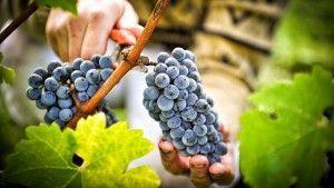 Рецепт приготовления вина