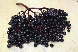 Рецепт вина из черной бузины