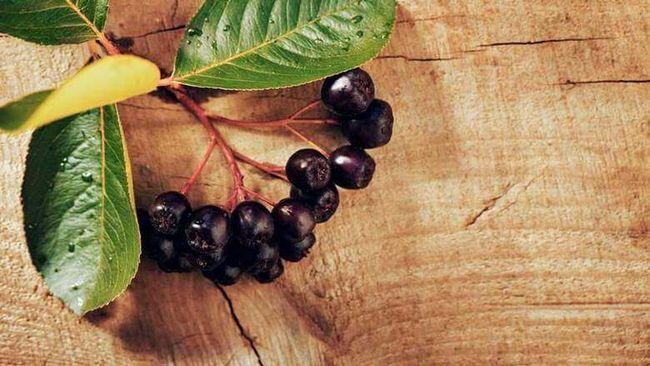 Рецепты настоек на черноплодной рябине. Осеннее настроение
