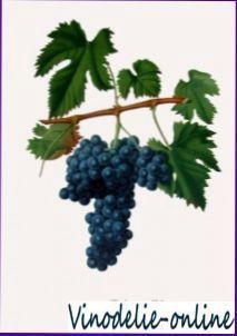 Виноград «рислинг»