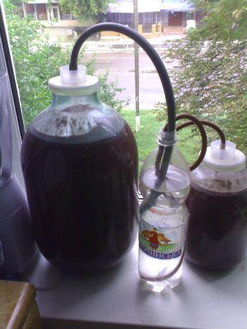 брожение кизилового вина под водяным затвором