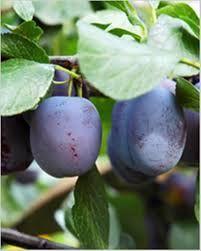 Moonshine de prune