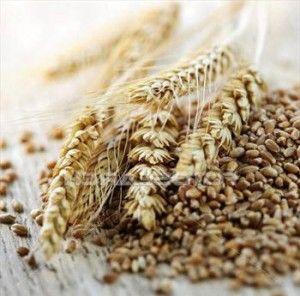 Самогон на пшенице