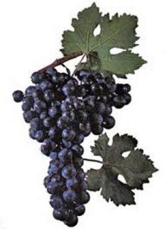 Томаты, начиненные соевым творогом с вином