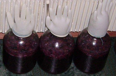брожение калинового вина