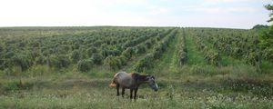 Виноделие Болгарии - ч. 2 - ч. 2