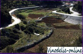 Виноделие в Хорватии
