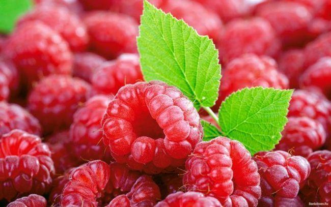 malina sadje