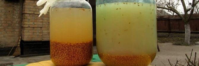 В какой последовательности готовится зерновой самогон?